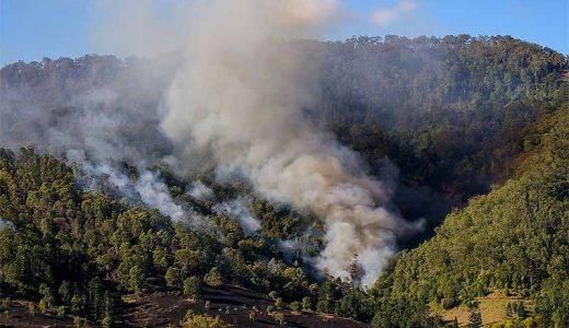 オーストラリア山火事の原因はユーカリの木の自然発火という常識