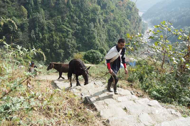 【ネパール】子連れでアナプルナベースキャンプトレッキング⑤:チョムロンの鶏肉が絶品宿