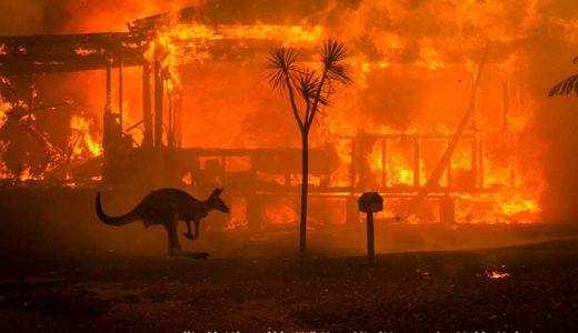 【豪州史上最悪】オーストラリアの山火事:23人が死亡でコアラも危機的な状況